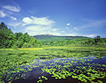 Perkins Pond with Bullhead Lilies with Mount Monadnock in Background