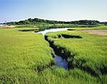 Salt Marsh off Katama Bay and Caleb Pond, Chappaquiddick Island,  Martha's Vineyard