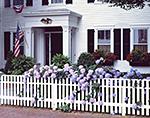 Blue Hydrangeas in Bloom along White Picket Fence, Martha's Vineyard