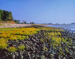Rocky Shoreline on Sheffield Island with Glasswort and Grasses, Stewart B. McKinney National Wildlife Refuge, Long Island Sound, Norwalk Islands, Norwalk, CT