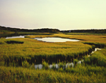 Salt Marsh in Morning Light off Katama Bay and Caleb Pond, Chappaquiddick Island, Martha's Vineyard