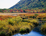 Cromwell Brook and Great Meadow in Fall from Park Loop Road, Acadia National Park, Mt. Desert Island
