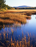Late Light in Fall over Marsh at New Mill Meadow along Duck Brook with Sargent Mountain in Background, Acadia National Park, Mt. Desert Island