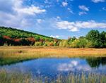 Marsh Wetlands and Woodlands in Fall at Breakneck Ponds, Acadia National Park, Mt. Desert Island