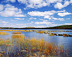 Rushes and Rocks at Eagle Lake in Fall under Blue Sky and Cumulus Clouds, Acadia National Park, Mt. Desert Island