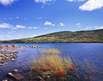 Rushes at Eagle Lake in Fall with Cadillac Mountain on Opposite Shore under Blue Sky and Cumulus Clouds, Acadia National Park, Mt. Desert Island