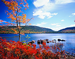Highbush Blueberries and Red Maple at Eagle Lake in Fall with Cadillac Mountain on Opposite Shore, Acadia National Park, Mt. Desert Island