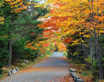 Fall Foliage along Carriage Road, Acadia National Park, Mt. Desert Island