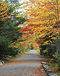 Fall Foliage along Carriage Road, Acadia National Park, Mt. Desert Island