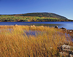 Rushes, Eagle Lake and Cadillac Mountain in Fall, Acadia National Park, Mt. Desert Island