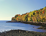 Early Morning Light on Foliage along Shoreline of Otter Cove in Fall, Acadia National Park, Mt. Desert Island