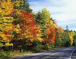 Brilliant Fall Foliage along Roadside through Acadia National Park, Mt. Desert Island