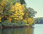 Fall Foliage along Shoreline of Walden Pond, Deep Cove, Walden Pond State Reservation
