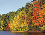 Fall Foliage along Shoreline of Walden Pond at Thoreau's Cove, Walden Pond State Reservation