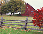Burning Bush or Winged Euonymus near Split Rail Fence with Red Barn in Fall