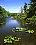 Guilder Pond, Mt. Everett State Reservation, Berkshire Mountains