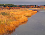 Marsh Edge in Fall, Herring River, Cape Cod National Seashore