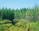 Inner Adirondack Woodlands