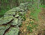 Stone Wall, Wachusett Meadow Wildlife Sanctuary
