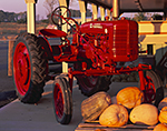 Red Tractor and Pumpkins