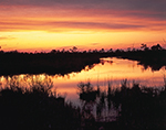 Marsh and Pocosins at Sunset on Alligator River