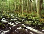 Rutland Brook and Hemlock Forest in Spring, Massachusetts Audubon Wildlife Sanctuary, Petersham, MA