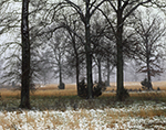 Trees, Pasture and Fog during Rare Snowstorm, Faulkner County near Enola, AR