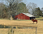 Old Red Barn with Horse, Pond and Fence, Conway County, St. Vincent, AR