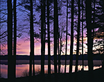 Predawn: Lake Dennison and White Pines at Birch Hill Wildlife Management Area, Winchendon, MA
