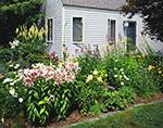 Summer Flower Garden, Mt. Desert Island, Tremont, ME