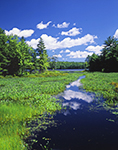 Sportsman Pond in Summer with Pickerelweed under Blue skies and White Puffy Clouds, Fitzwilliam, NH
