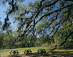 Live Oaks and Picnic Tables, Cumberland Island National Seashore, GA