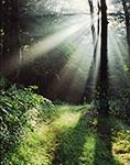 Woodland Path with Sunbeams, Athol, MA