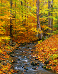 Small Creek through Hardwood Forest in Fall, Allegany State Park, Red House, NY