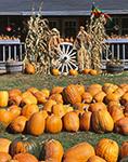 Ferncol Farm Pumpkin Stand, Templeton, MA