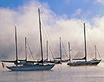 Sailboats in Morning Ground Fog, Connecticut River, Essex, CT
