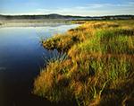 Early Morning Light on Northeast Creek, Fresh Meadow Marsh (Estuarine Marsh), Mt. Desert Island, Mt. Desert Region, Bar Harbor, ME