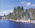 Conifer Forest and Raquette River, Adirondack Mountains, NY