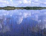 Nine Mile Pond, Everglades National Park, FL