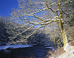 Red Oak and Millers River with Clearing Skies after Snowstorm, Athol, MA