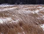 Heavy Frost on Meadow Grasses, Templeton, MA