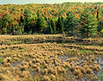 Beaver Brook Wetlands Marsh in Fall, Keene, NH