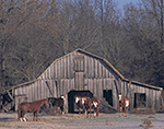 Horses and Old Barn, Pulaski County, AR