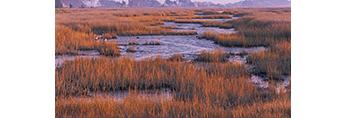 Golden Salt Marsh, Middle Hoopers Island, Eastern Shore, MD