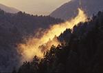 Backlit Mountain Smoke,  Great Smoky Mountains National Park, TN