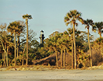Palms and Hunting Island Lighthouse, Hunting Island State Park, SC