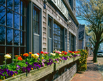 Colorful Window Boxes with Spring Flowers along Main Street during Daffodil Festival, Nantucket Island, Nantucket, MA