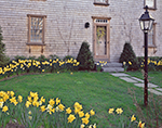 Historic Colonial-style House with Cedar Shingles, Daffodils and Lamppost, Nantucket Island