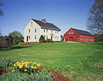 New England Colonial-style Home and Red Barn with Daffodils in Spring