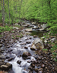 Roaring Branch Creek, Adirondack Park